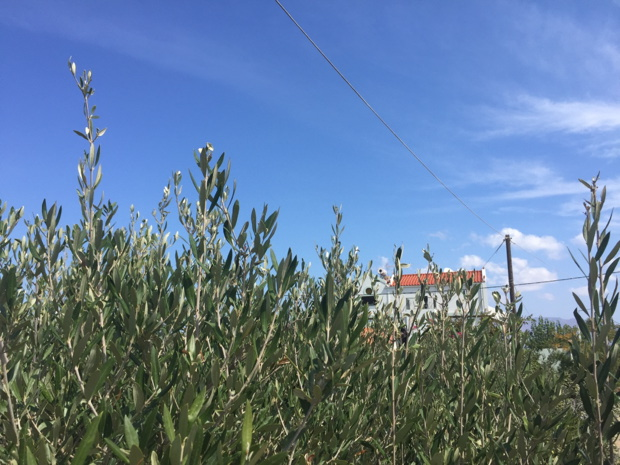 olivenplantage-olive-tree-apartments-kreta